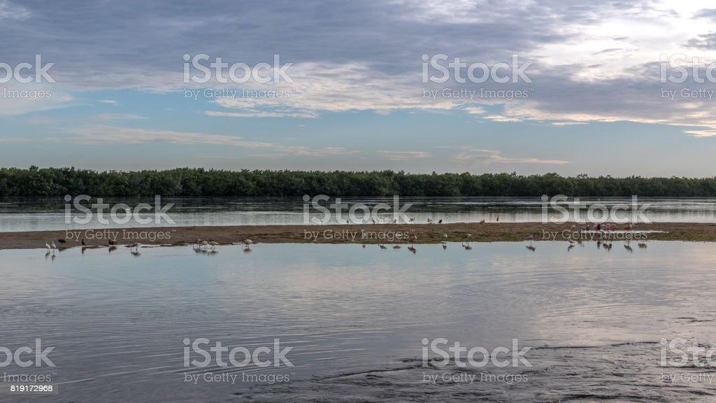 Summer Landscape, J.N. ''Ding'' Darling National Wildlife Refuge, Sanibel Island, Florida, USA stock photo