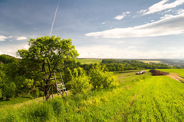 Sommer-Landschaft nahe Kahla – Foto