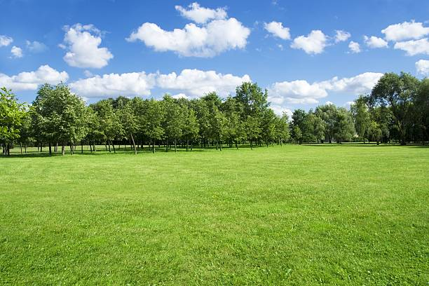 summer landscape of grass and trees - public park stock photos and pictures
