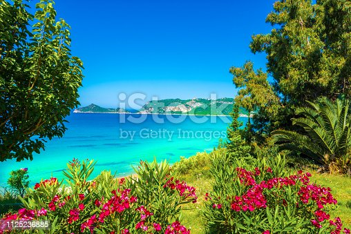 Summer landscape with red flowers, palm trees and blue sea