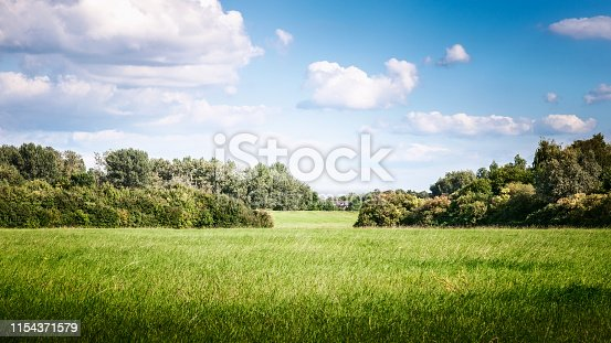 Green grass field with trees, blue sky, clouds and sunlight. Nature landscape in summer