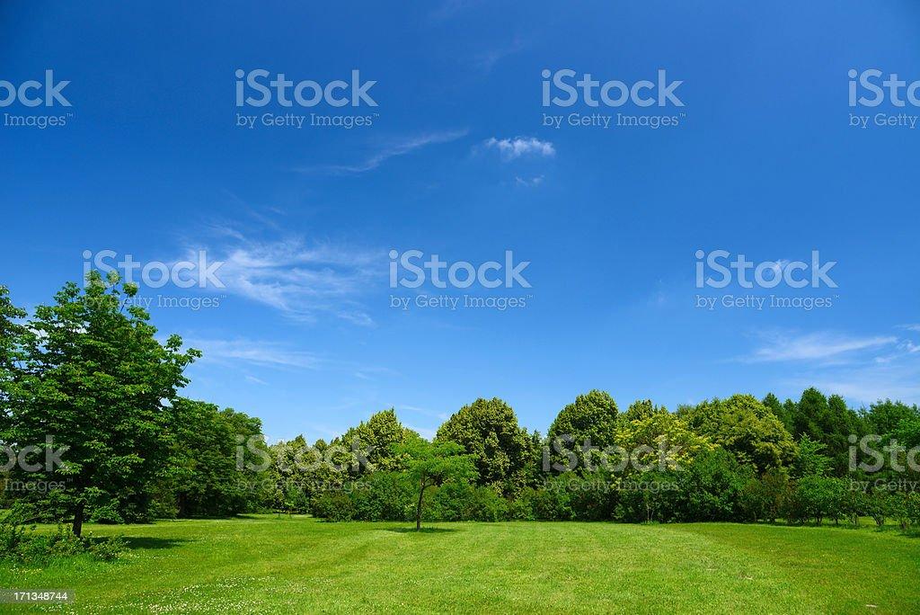 Paisaje de verano - foto de stock
