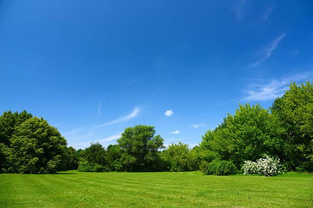 Summer Landscape stock photo