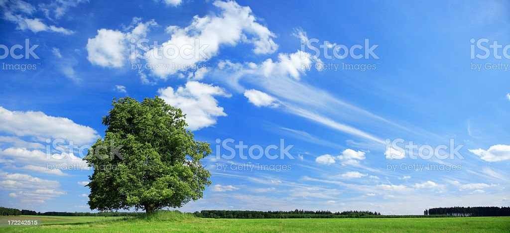 Summer Landscape - Royalty-free Agricultural Field Stock Photo