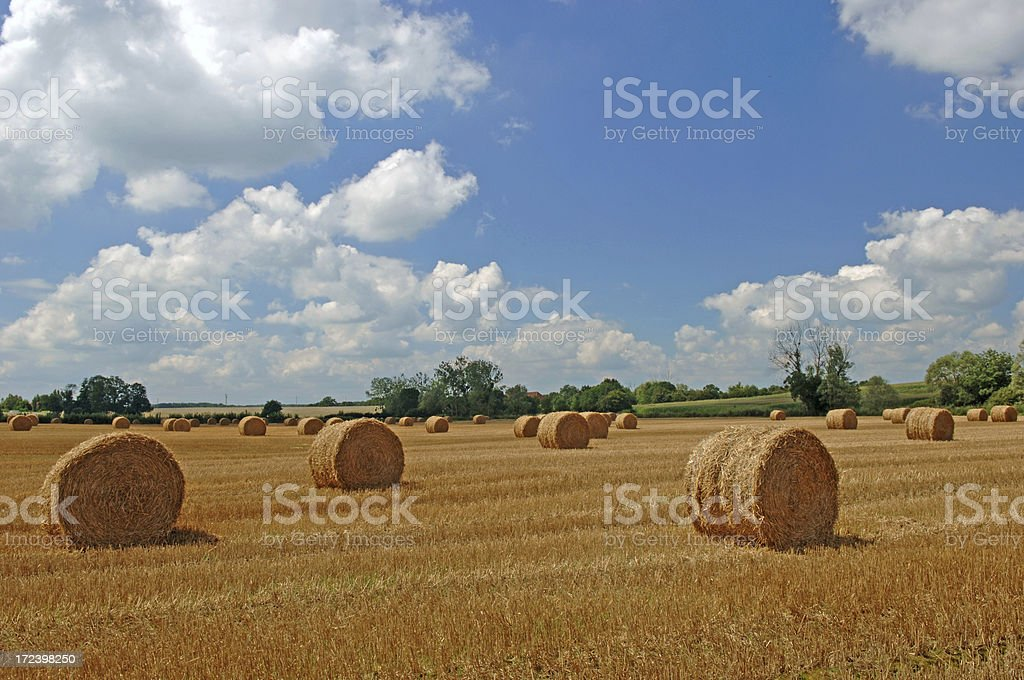 Summer landscape #1 royalty-free stock photo