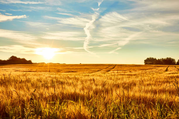summer landscape - rural scene stock pictures, royalty-free photos & images