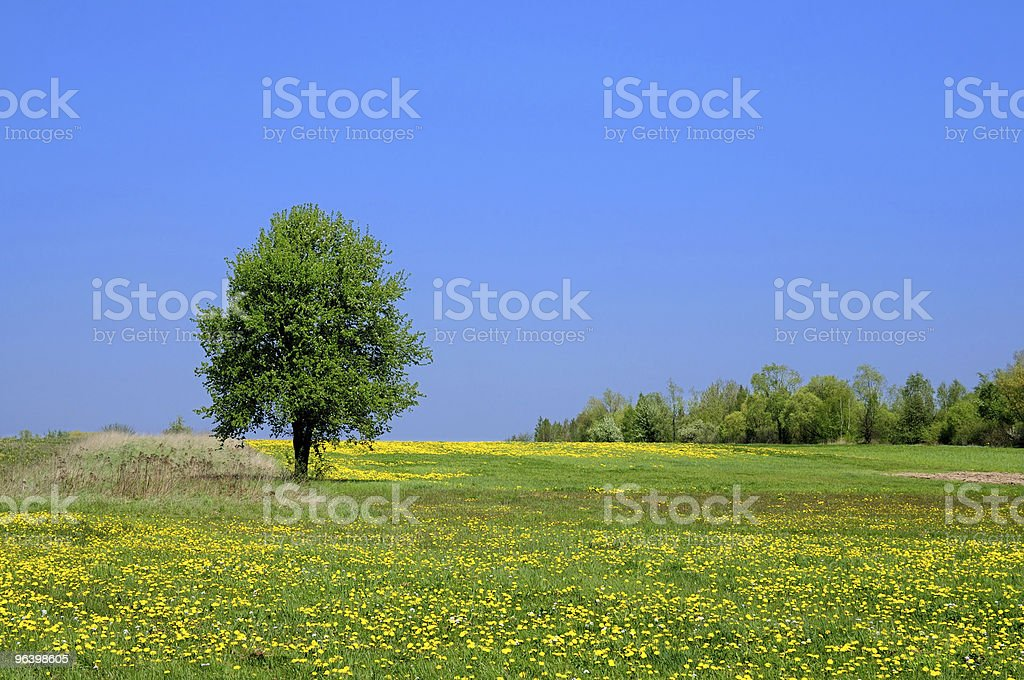 Summer Landscape - Royalty-free Blue Stock Photo
