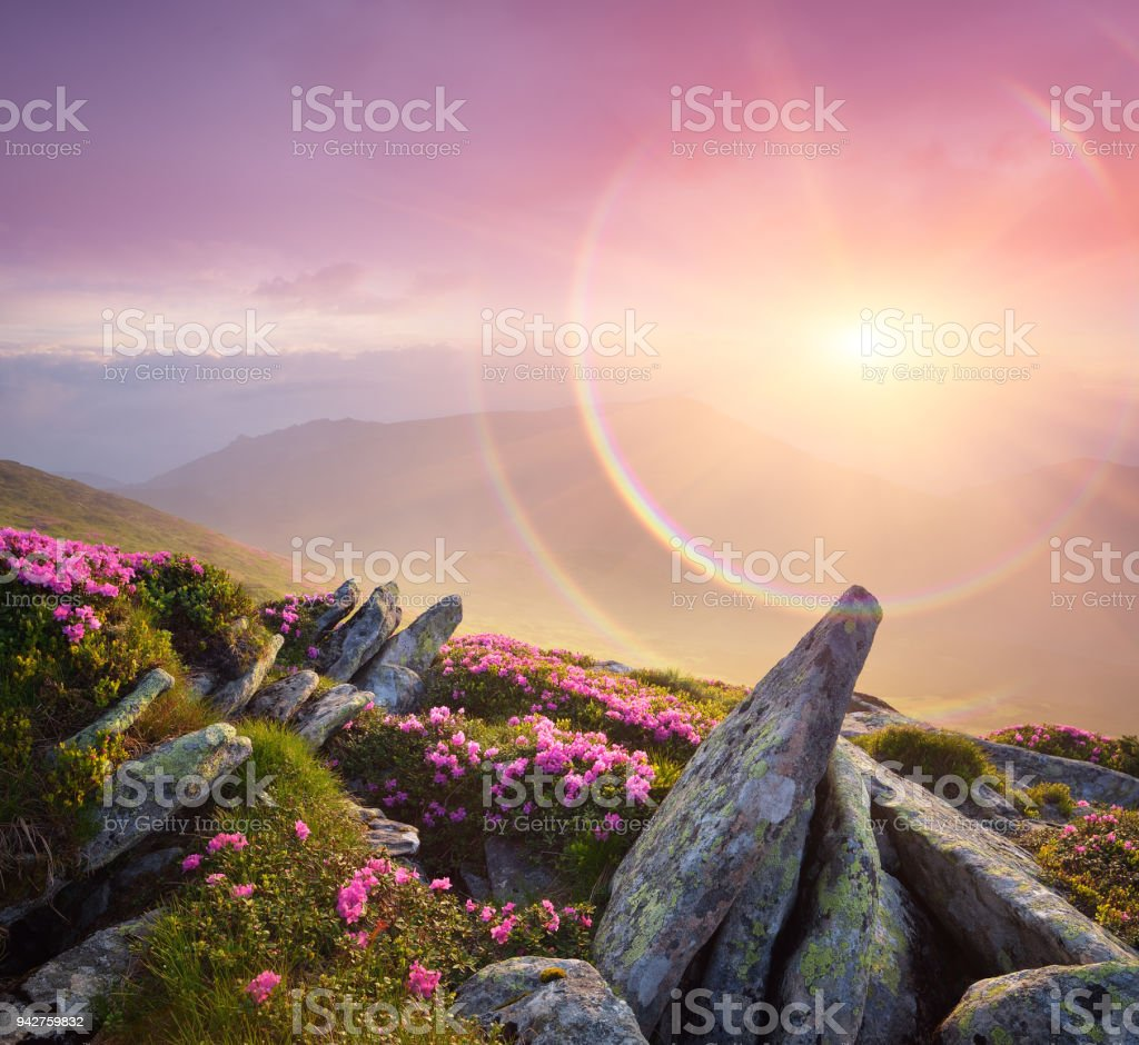 Summer Landscape With A Beautiful Sunrise And Mountain Flowers Stock