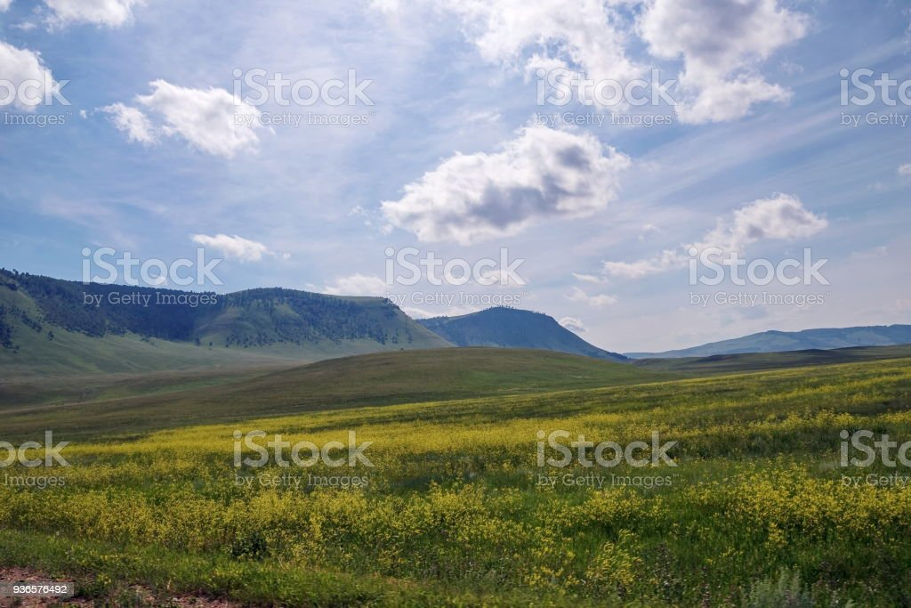 Summer landscape with a blooming yellow flowers of a meadow on the background of wooded mountains. stock photo