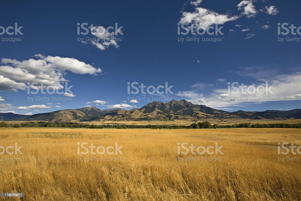 Summer Landscape with a golden grass field stock photo