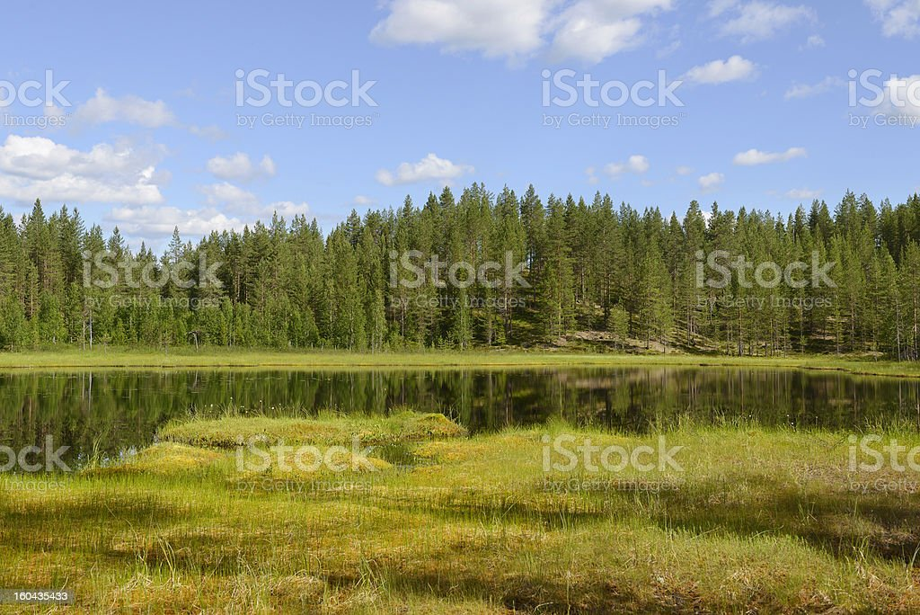 Summer landscape with a lake and swamp. royalty-free stock photo