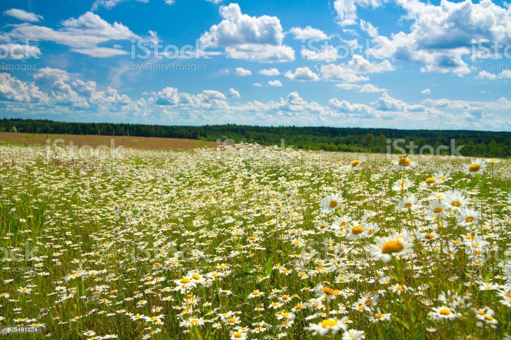 summer landscape with a meadow, blue sky and white clouds photo libre de droits