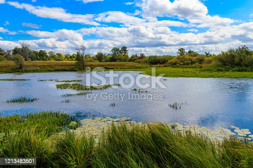 Little girl sitting on grass and looking at lake with floating ducks. Back view