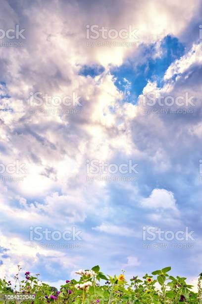 Summer landscape with flowers on blooming meadow and clouds in the picture id1084322040?b=1&k=6&m=1084322040&s=612x612&h=3rjr2cdmtsys joexa50h6ta0ibod277fjq20yfeqzk=