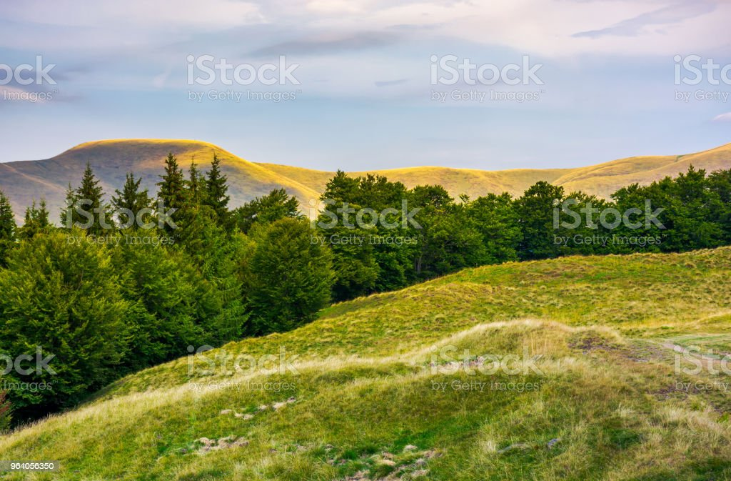 summer landscape with forested hills - Royalty-free Beauty Stock Photo