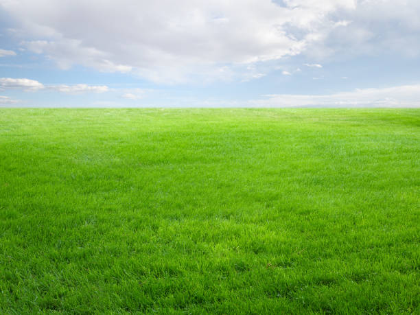 Summer landscape with grass field and sky stock photo