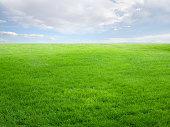 夏の景観、芝フィールドとスカイ
