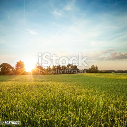 Summer Green Field on the Background of Beautiful Sunset. Copy Space.