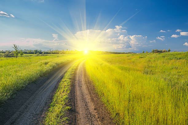 Summer landscape with green grass and road stock photo
