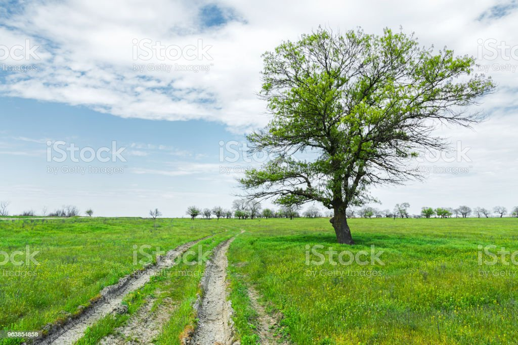 Summer landscape with green grass, road and clouds - Royalty-free Agricultural Field Stock Photo