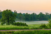 Summer landscape with green misty meadow, trees and sky. Fog on the grassland at morning