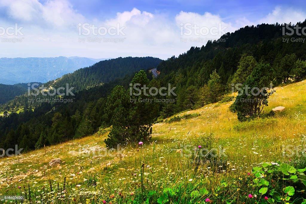Summer landscape with mountain meadow stock photo