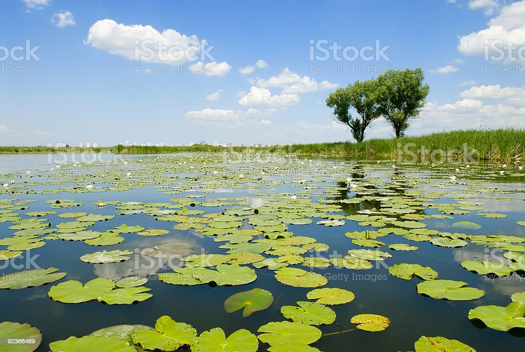 Summer landscape with river. royalty-free stock photo