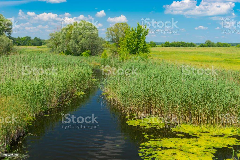 Summer landscape with small river Merla overgrown with fresh cane, Poltavskaya oblast, Ukraine stock photo