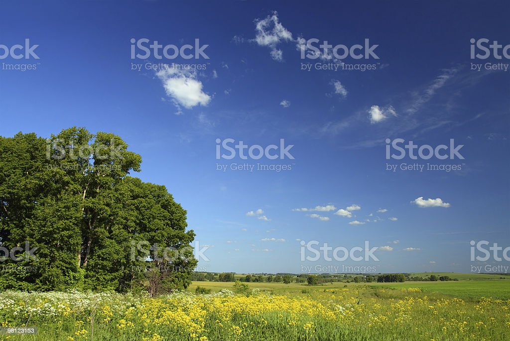 summer landscape with small woods royalty-free stock photo