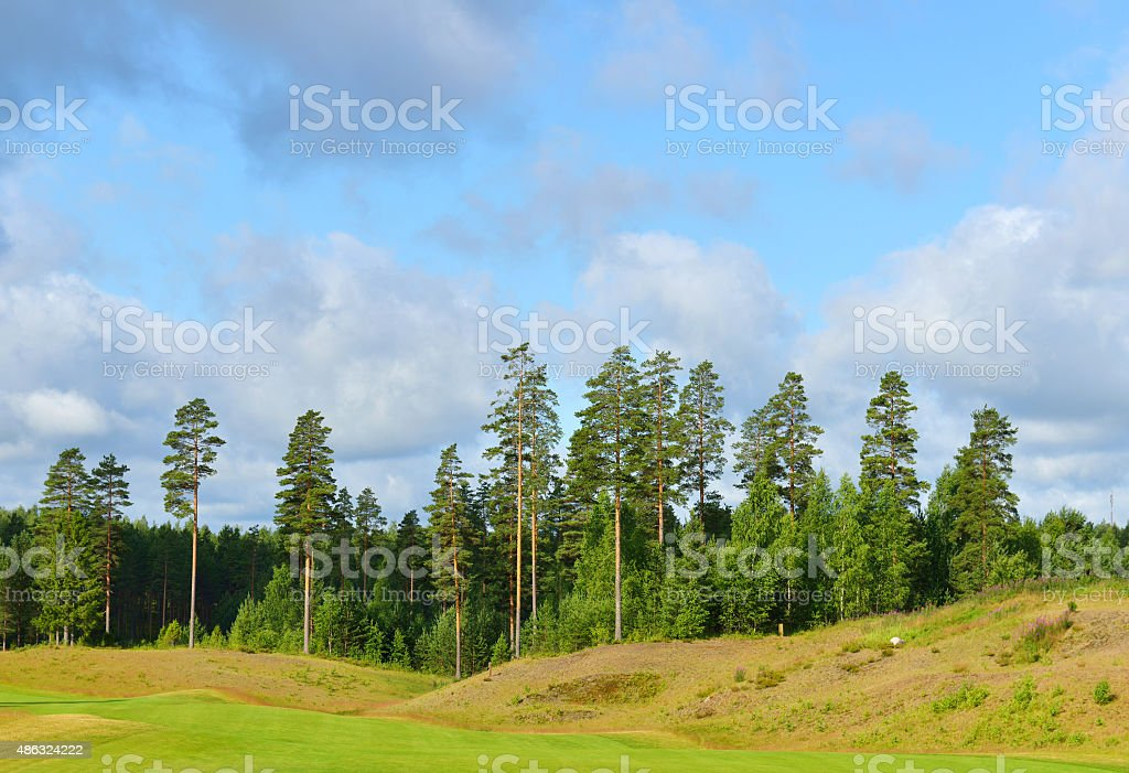Summer landscape with tall pine trees and cloudy sky stock photo