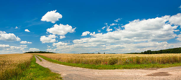 Summer Landscape with Winding Dusty Farm Road Through Crop Fields stock photo