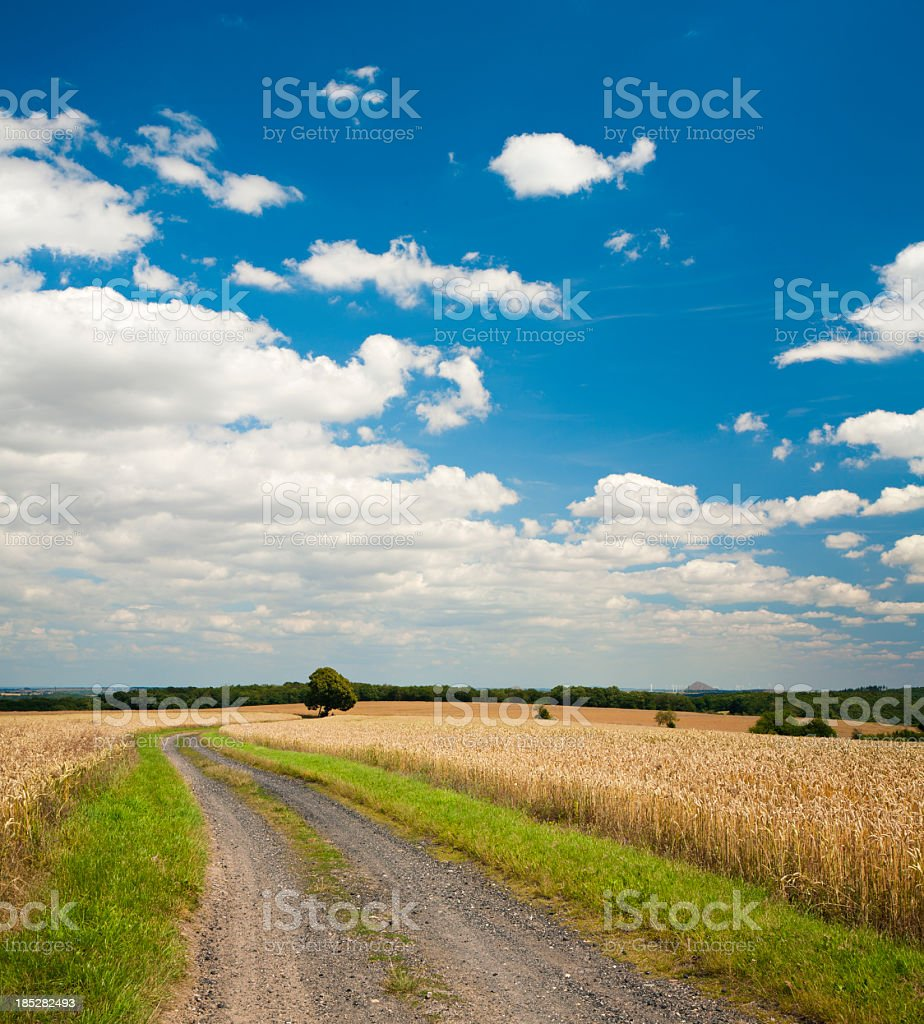 Summer Landscape with Winding Dusty Farm Road Through Crop Fields royalty-free stock photo
