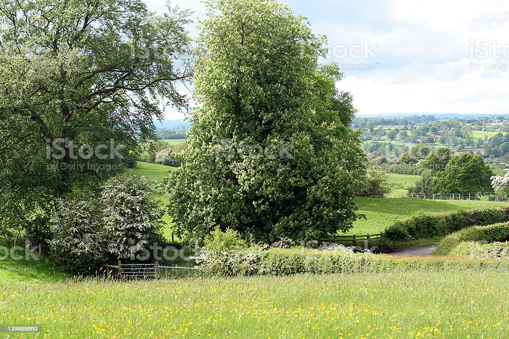 summer lane royalty-free stock photo
