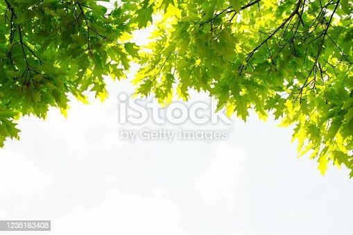Foliage on defocused sky.