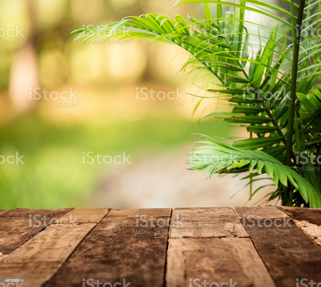 Summer Lush Green Background Fern Rustic Wooden Table Royalty Free Stock Photo