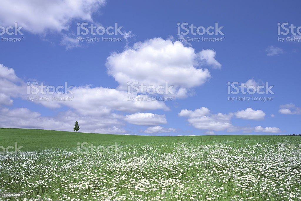 Summer meadow and alone Tree royalty-free stock photo