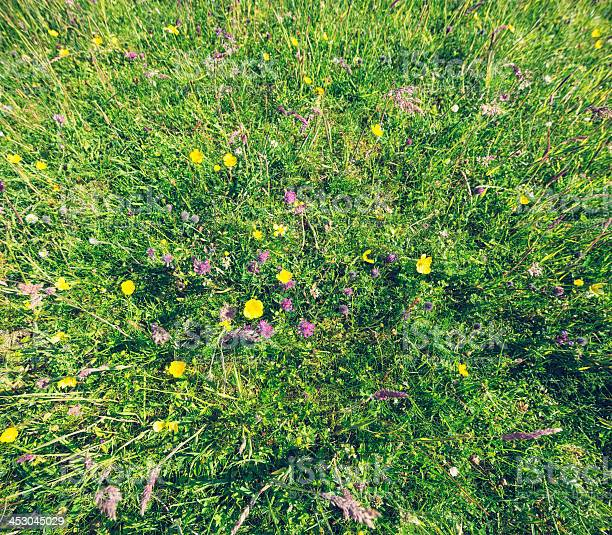 Photo of Summer Meadow and Wildflowers From Above