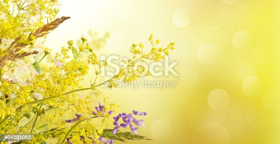 istock Summer meadow flowers 464591055