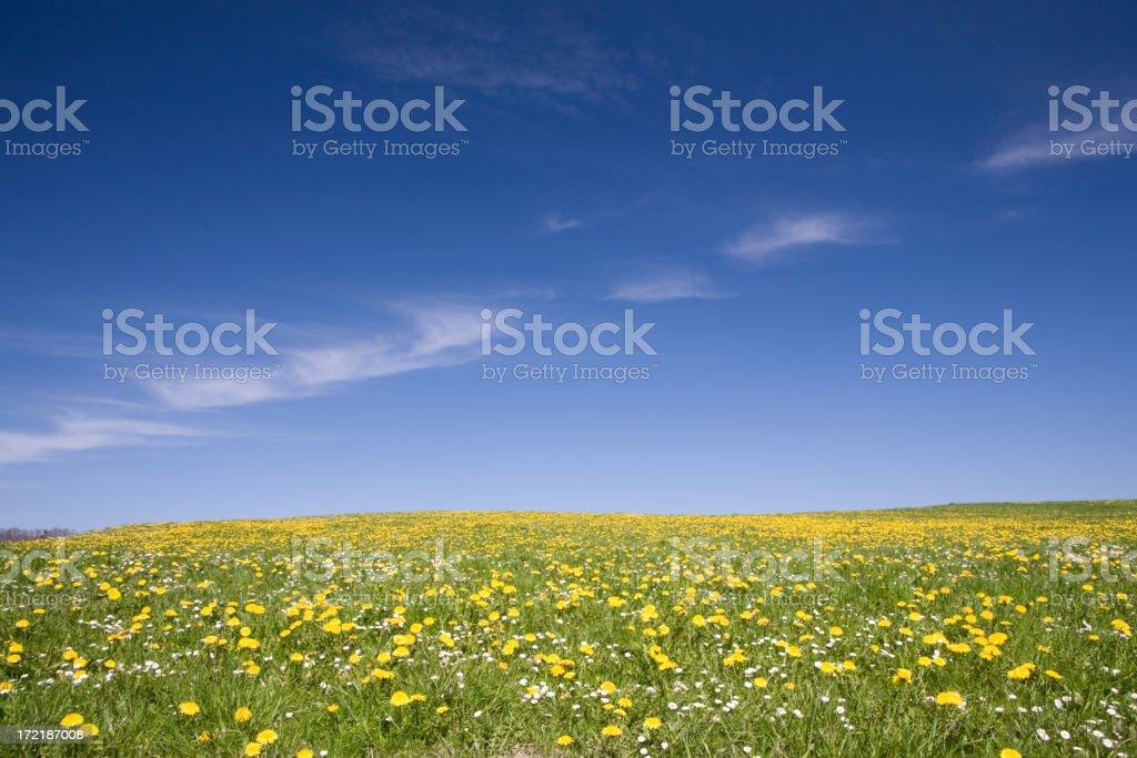 summer meadow II royalty-free stock photo