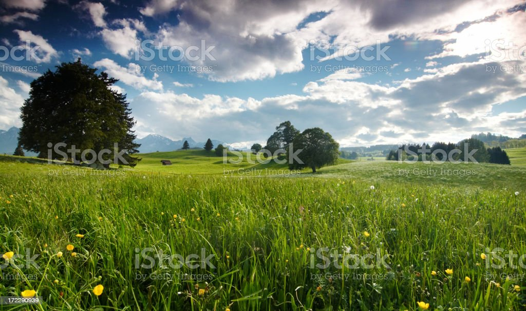 summer meadow in bavaria germany stock photo