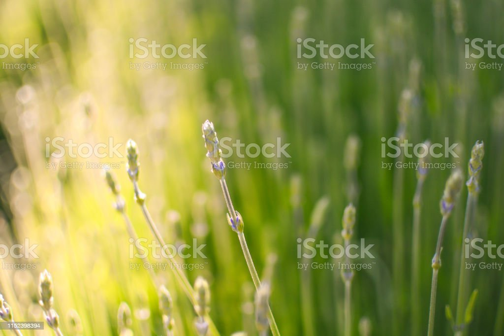 Summer meadow in warm evening sunlight. Relaxing and warm feeling...