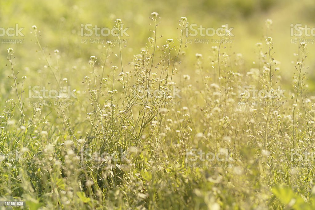 Summer meadow macro abstract background royalty-free stock photo