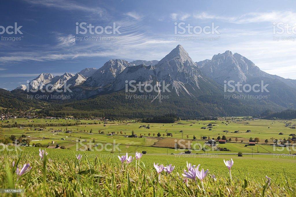 summer meadow near ehrwald royalty-free stock photo