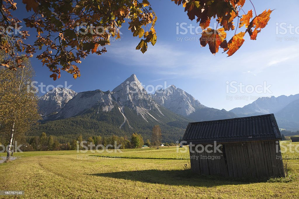 summer meadow near ehrwald stock photo