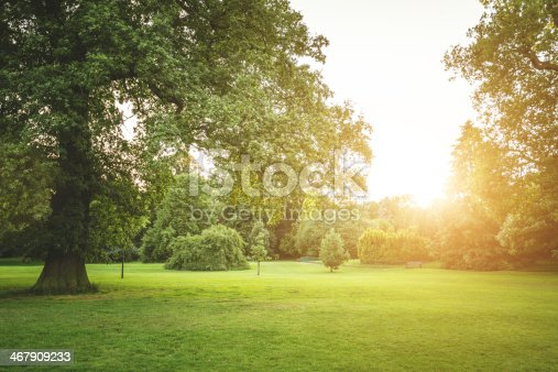 Summer meadow park on sunset