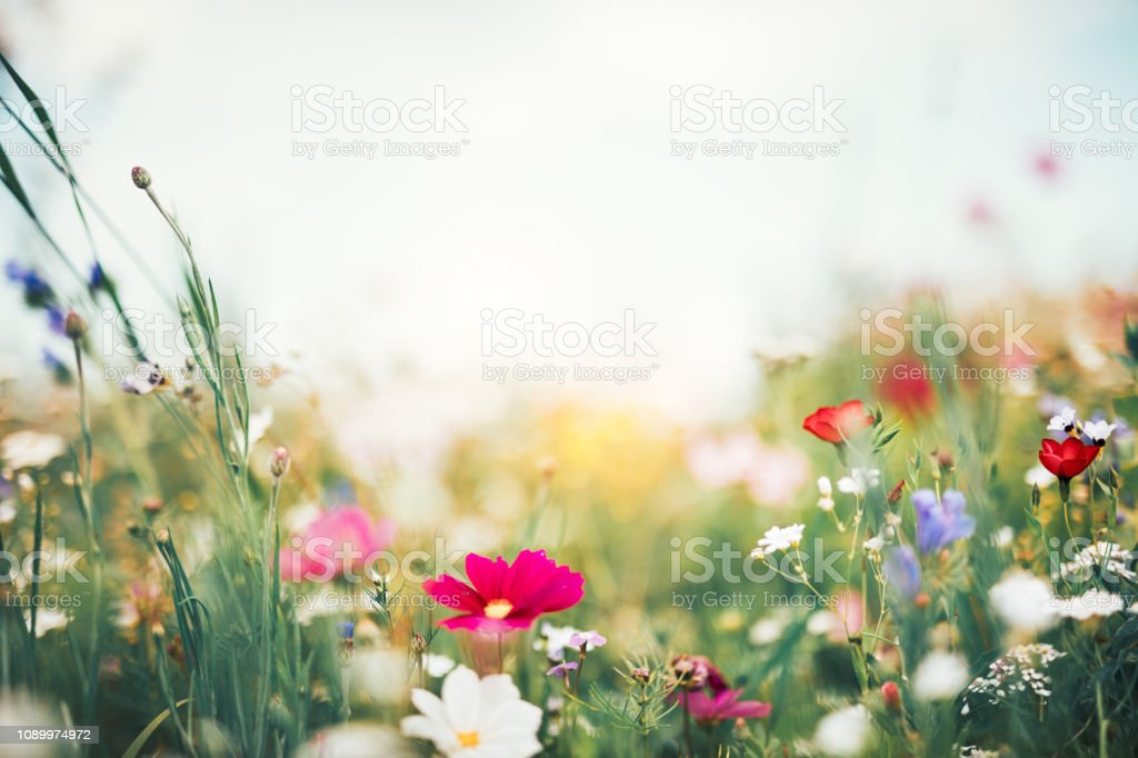 Summer Meadow
