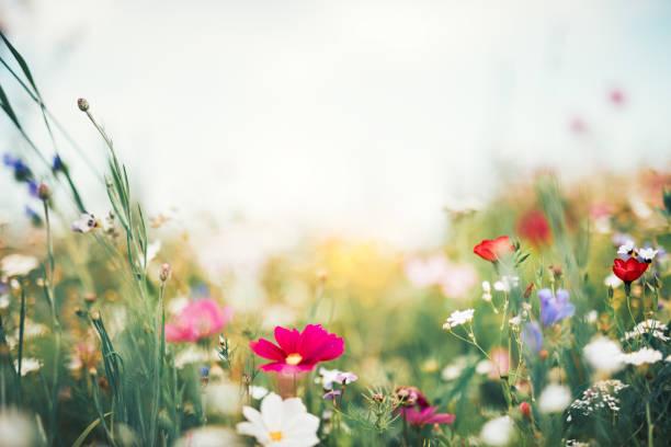 Summer meadow picture id1089974972?b=1&k=6&m=1089974972&s=612x612&w=0&h=gwhk8gjum0dinnn7ksk dagh3niprt8kg8t30qqfbag=