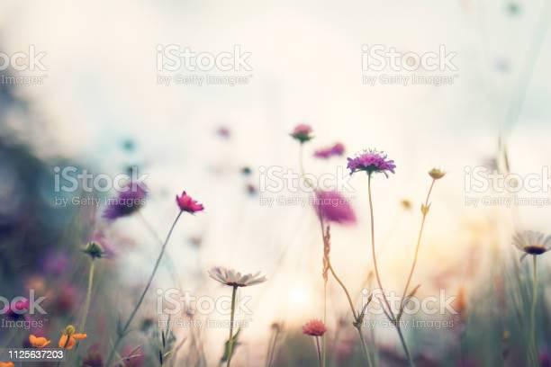Summer meadow picture id1125637203?b=1&k=6&m=1125637203&s=612x612&h=vkjo72zzujbl9jda0vpvwsnfwhbimlskidsfg4z5 mk=