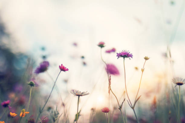Summer Meadow Summer meadow full of colorful flowers. tranquil scene stock pictures, royalty-free photos & images