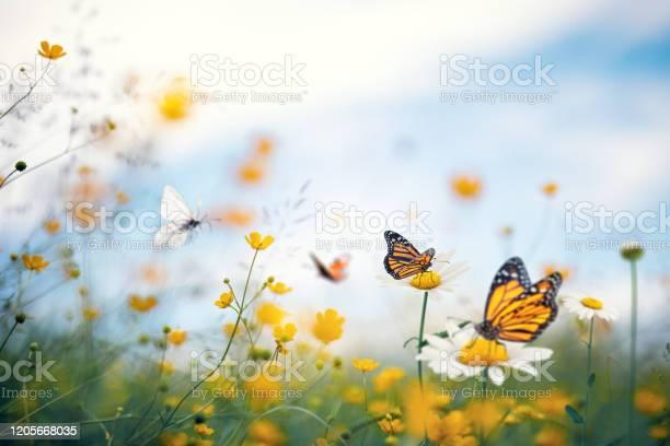 Summer meadow picture id1205668035?b=1&k=6&m=1205668035&s=612x612&h= s3m1w1dqv1cvy5p6lbmapyuaxhybltugcosc1o2 yo=